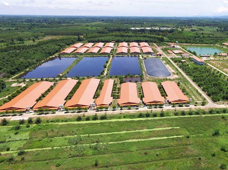 ซีพีเอฟ ปันน้ำปุ๋ยให้เกษตรกรลดผลกระทบแล้งปีที่ 19