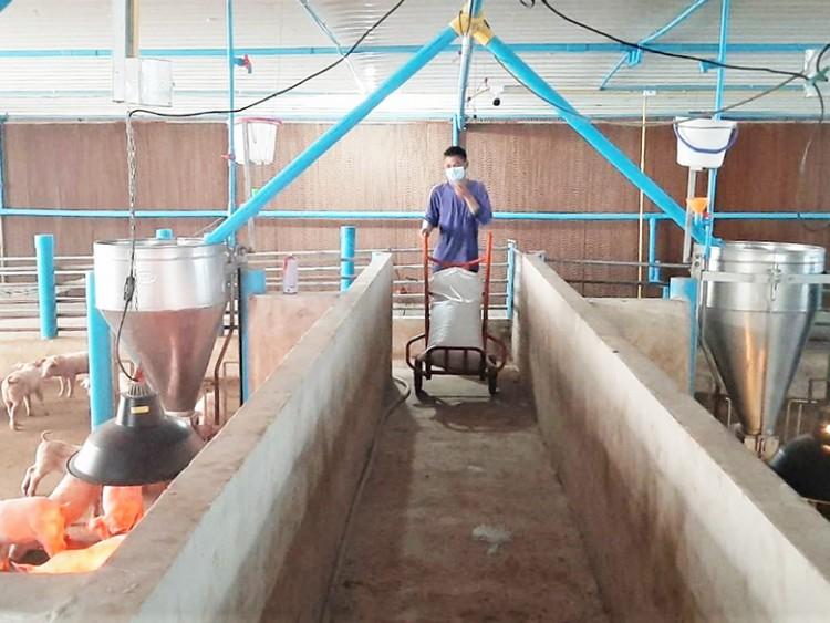 เกษตรกรคอนแทรคฟาร์ม ซีพีเอฟ สร้างหลักประกันอาหารปลอดภัยในวิกฤตโควิด-19
