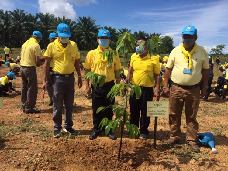 สตูลเปิดโครงการปลูกป่าและป้องกันไฟป่า เพิ่มพื้นที่สีเขียว