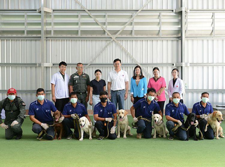 เชฟรอน-จุฬา วิจัยสำเร็จ ฝึกสุนัขดมกลิ่นผู้ป่วยติดเชื้อโควิด-19 ไม่แสดงอาการ แม่นยำ 94.8%