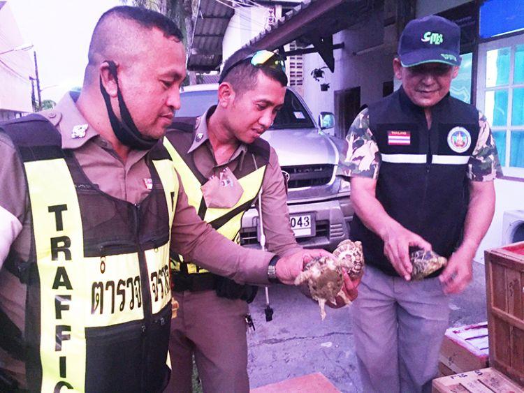ตรวจยึดพันธ์ุไก่ชนไทย-เต่า เตรียมลักลอบส่งอินโดนีเซีย