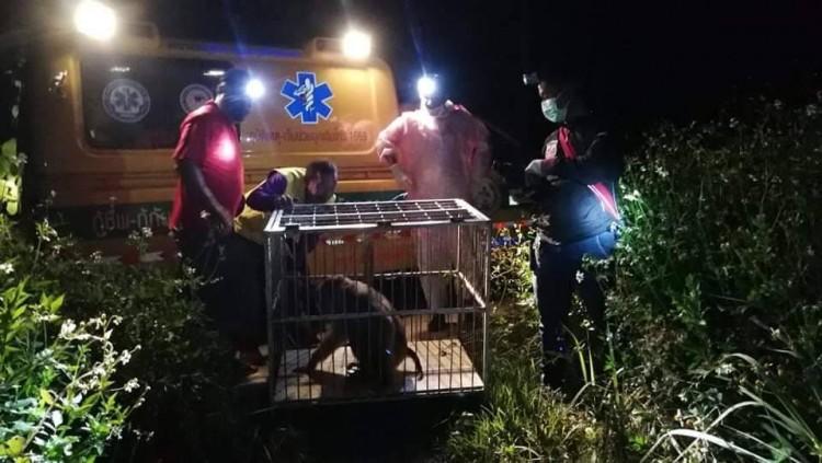 โควิด-19 เป็นเหตุลิงป่าอดอยาก ออกหาอาหารใกล้ชุมชนถูกสุนัขรุมกัดสาหัส-กู้ภัยช่วยไว้ได้