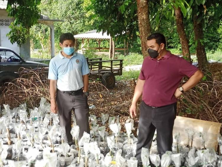 """""""กระท่อมไทย""""ปลุกเศรษฐกิจยุคโควิด-19 เพาะพันธุ์ขายสร้างรายได้ วันละ 500-1,000 บาท"""